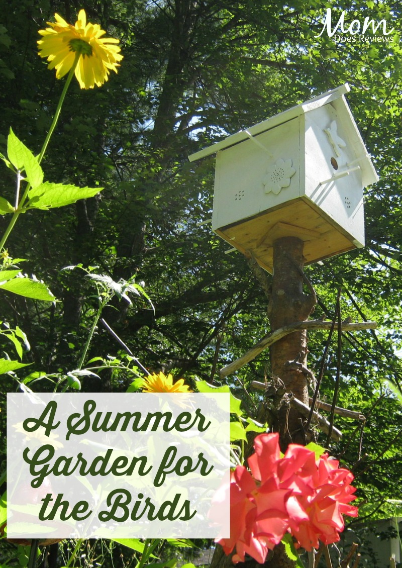A Summer Garden for the Birds