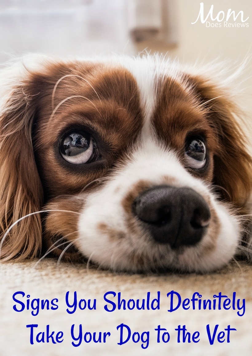 Can You Get Sick From Eating Dog Food
