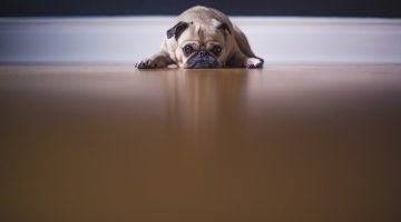 Signs You Should Definitely Take Your Dog to the Vet