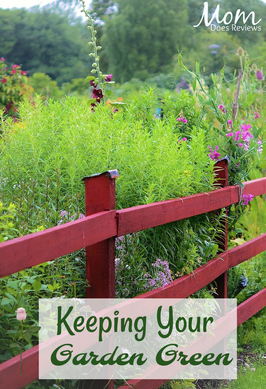 Keeping Your Garden Green #gardening #plants #Flowers #vegetables #greenthumb