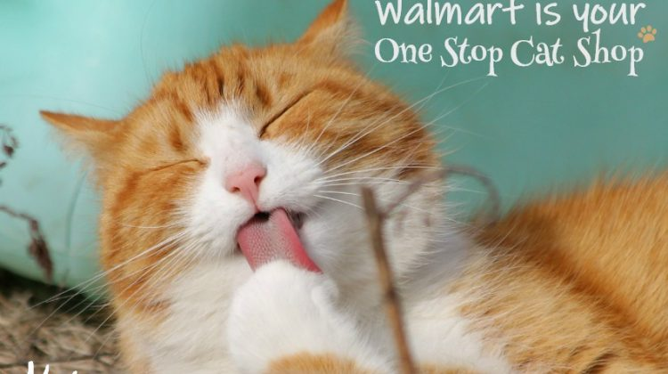 Walmart is your One Stop Cat Shop for Purina Cat Products #PurinaCatShop