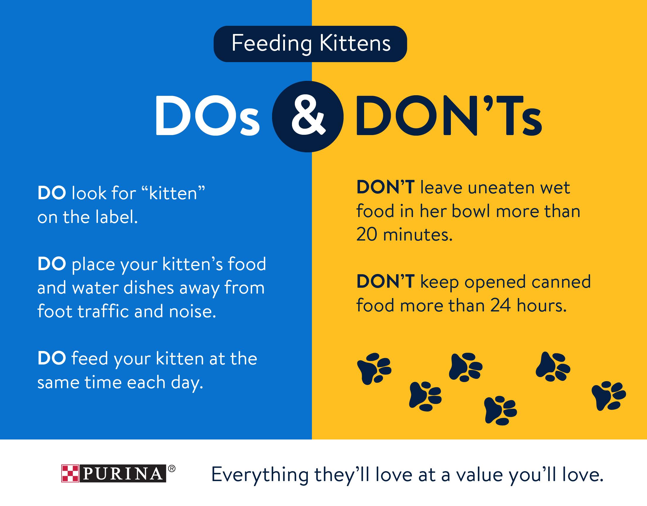 Walmart is your One Stop Cat Shop