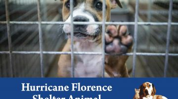 Hurricane Florence – Urgent Need for Fosters! #What'sYourLegacy?