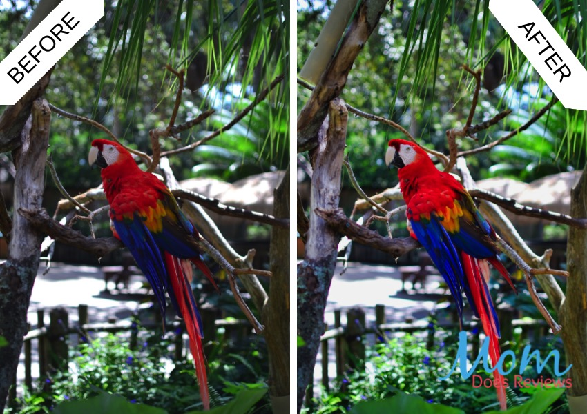 Parrot before and after editing
