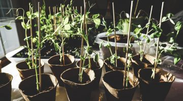 Growing Prospects: How Your Family Can Prepare for Spring Planting