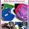 Pet Parents Dog Diapers & Belly Bands Giveaway! TWO Winners! (one gets diapers and one gets belly bands)