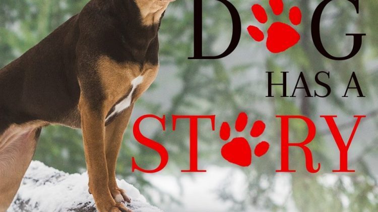 #Win A Dog's Way Home Prize Pack! US Only, ends 1/19 #ADogsWayHome