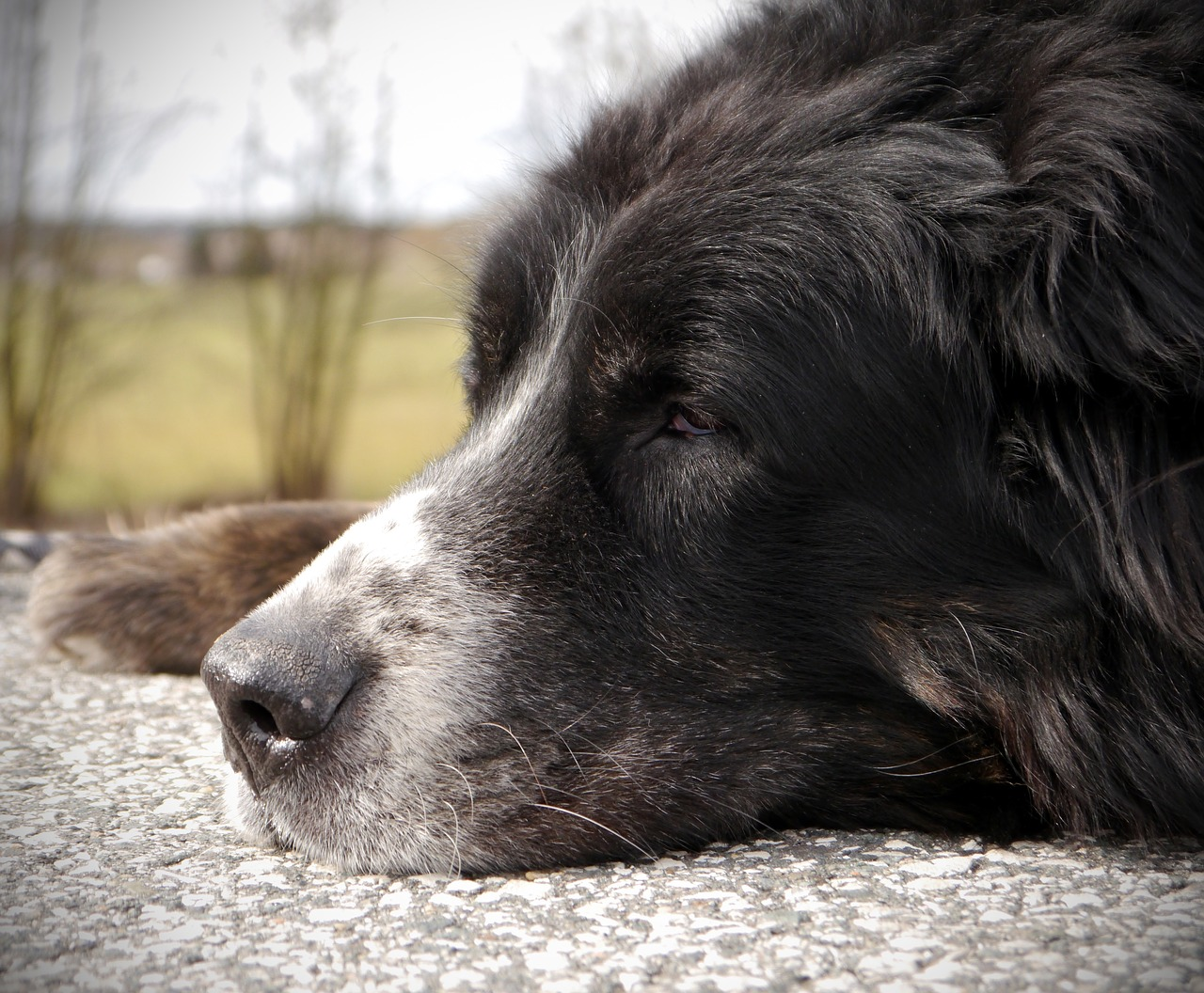 Your Complete Guide to Glucosamine and Chondroitin for Arthritic Pets