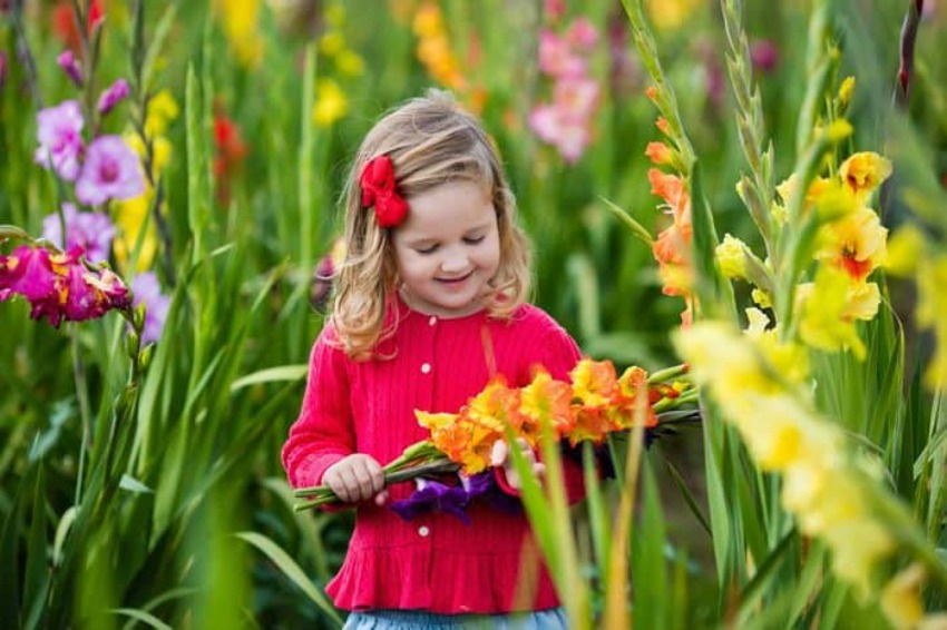 Edible Flower Garden For Kids