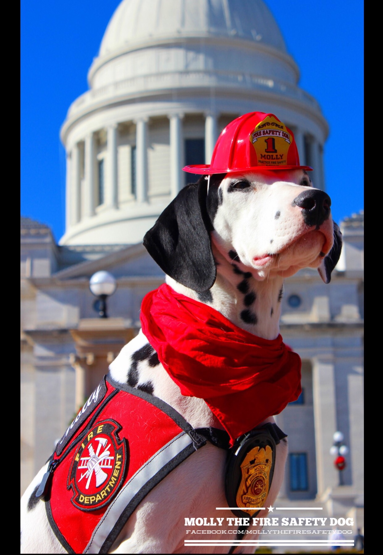 Follow Molly, the Fire Safety Dog, on her Superpowers Dogs' Tour! #MollysRoadTrip