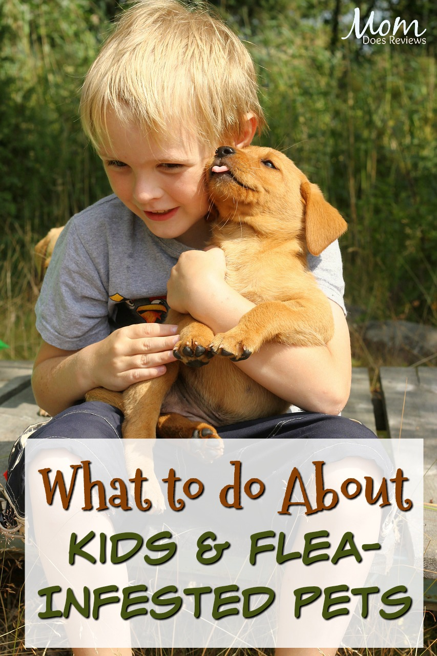Should you Keep Children Away From a Flea-Infested Pet? #pets #kids #parenting #fleas #dogs