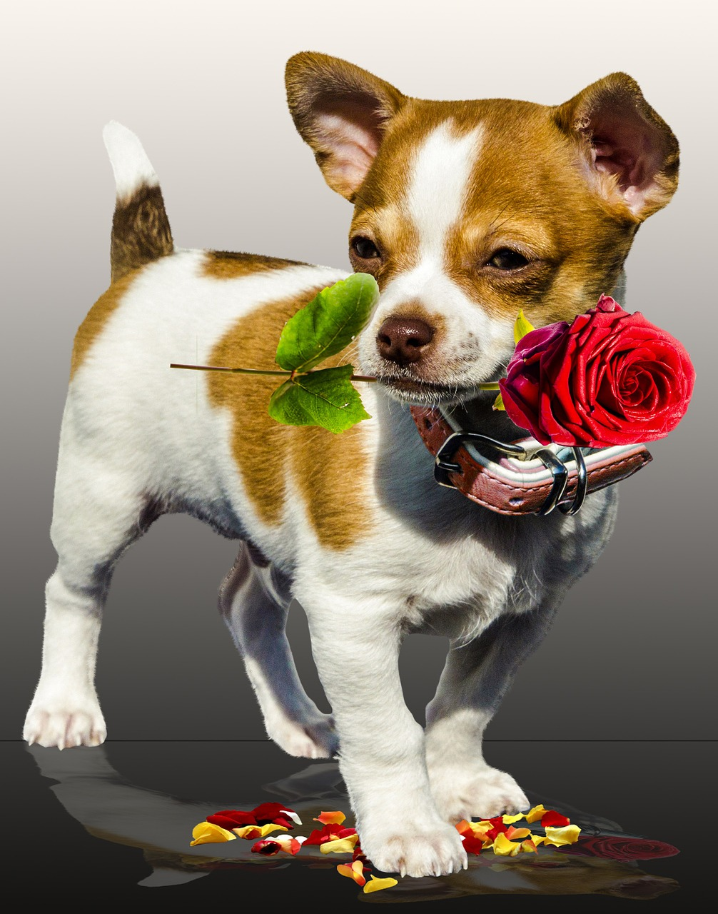 """The Real Power of Dog Love"" Report Shows Dog Love Eclipses Romance This Valentine's Day"