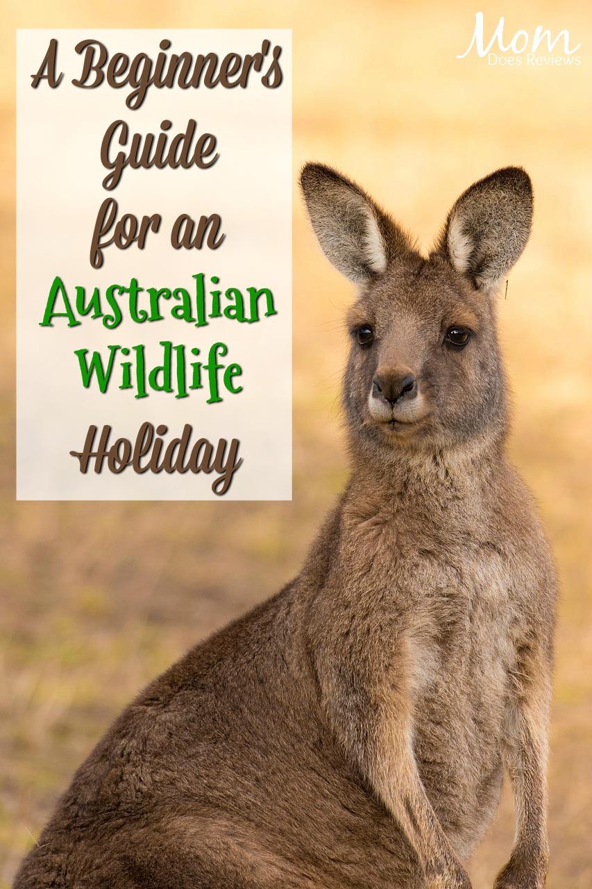 A Beginner's Guide for an Australian Wildlife Holiday #travel #Australia #wildlife #vacation
