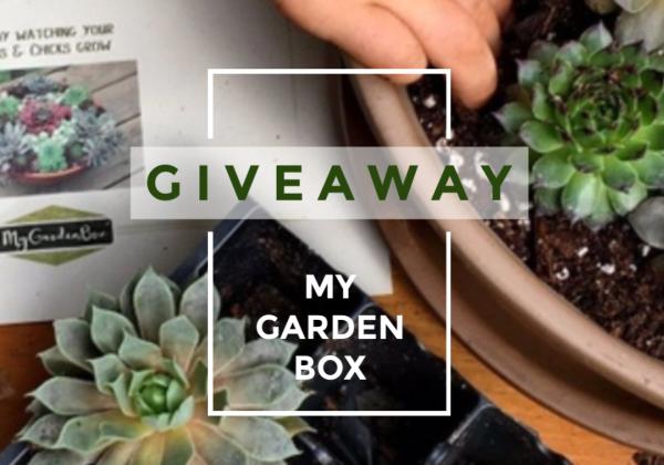 Win My Garden Box
