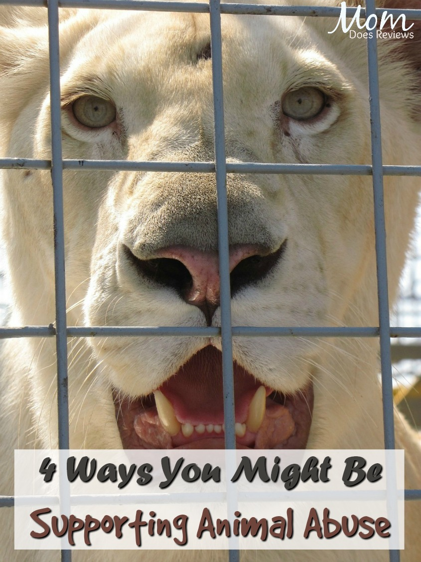 4 Ways You Might Accidentally Be Supporting Animal Abuse #animals #circus #puppymills #dolphins