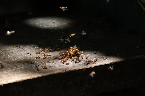 A Mother's Guide to Ant Prevention