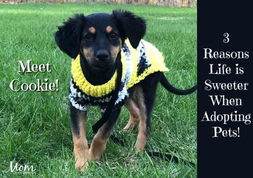 3 Reasons Life is Sweeter When Adopting Pets!
