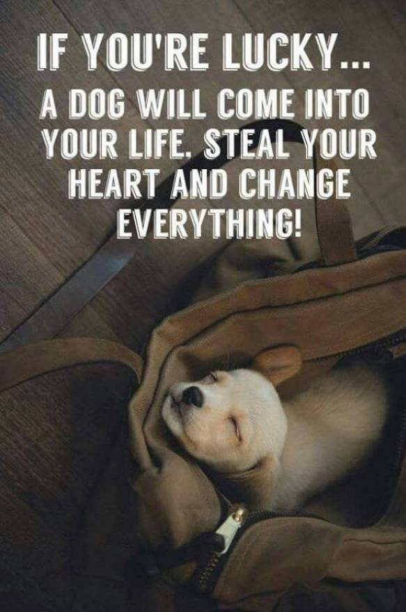 3 Great Reasons Life is Sweeter when Rescuing or Adopting Pets!