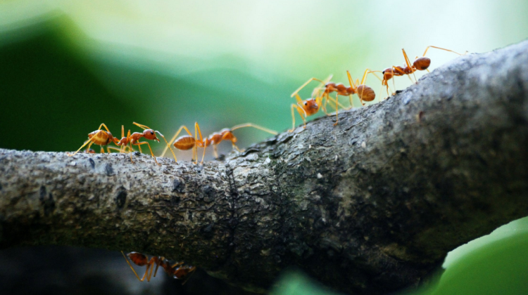 4 Common Pests to Keep Your Eye out for This Summer