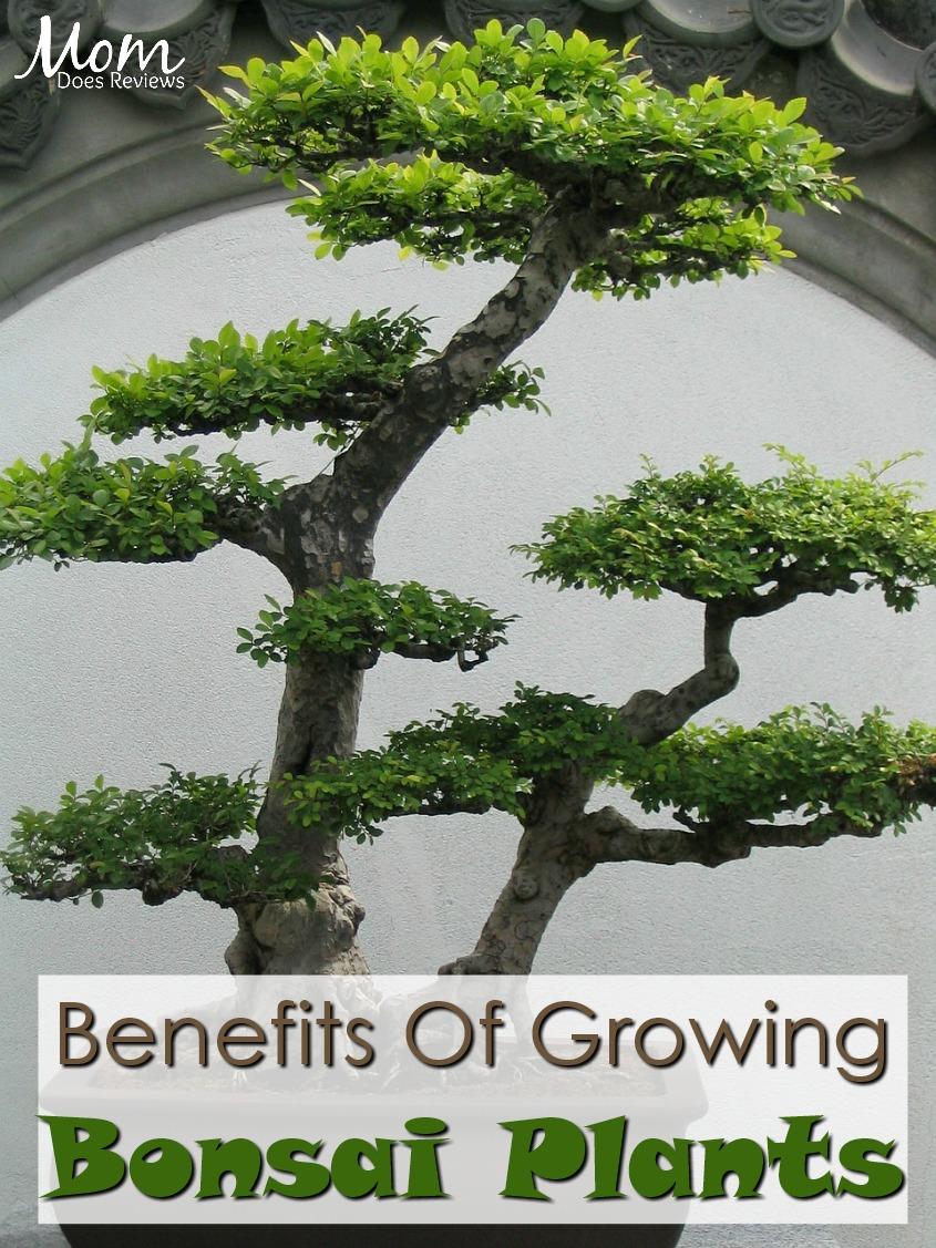 Benefits Of Growing Bonsai Plants In Your Home #plants #bonsai #gardening