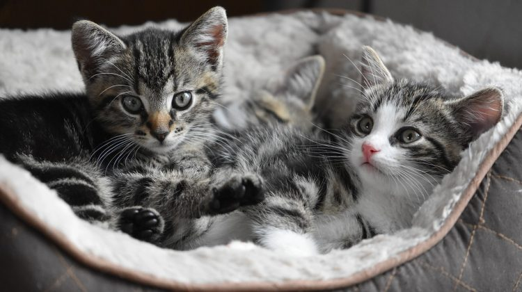 How to Find The Best Litter For Your Cat