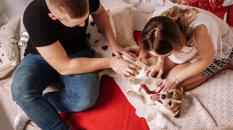 5 Perfect Gift Ideas for Dog Lovers