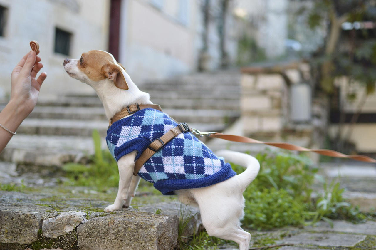 Dressing Up Your Pup: Should You Do It?