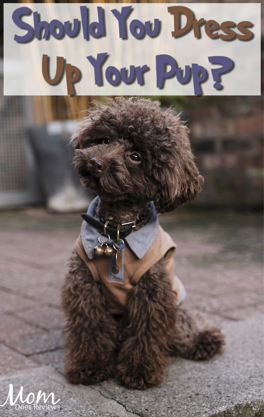 Dressing Up Your Pup: Should You Do It? #pets #dogs #dressup #pups #puppylove