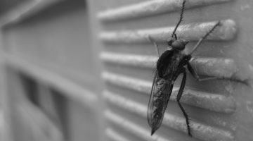 Securing Your Family from Pesky Pests in Your Home