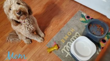 Put a Stop to Pets Tipping or Chasing Their Feeding Bowls with PetWeighter Dog Bowls
