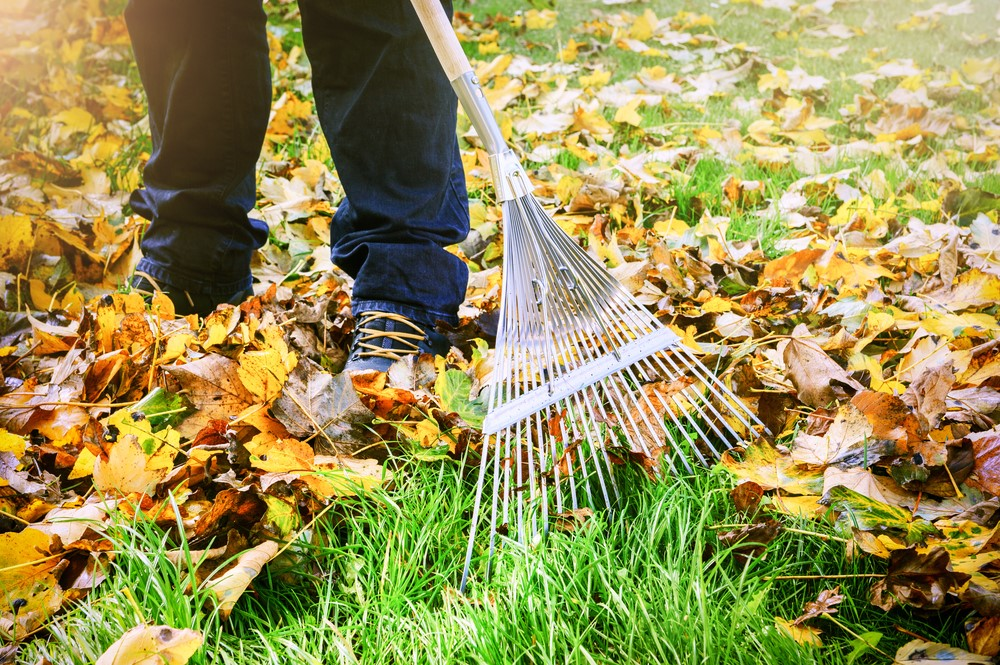 Green and Clean - The Perfect Ways to Keep Your Garden Tidy