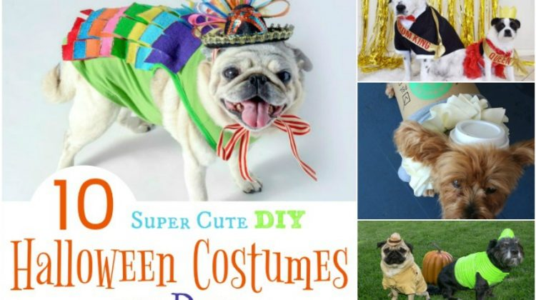 10 Super Cute DIY Halloween Costumes for Dogs