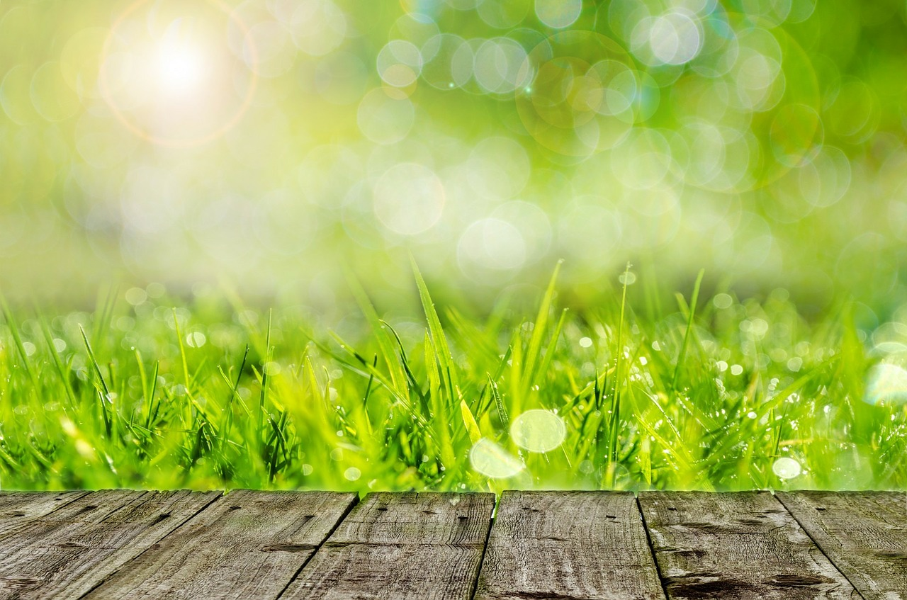 6 Environmentally-Friendly Ways to Care for Your Yard