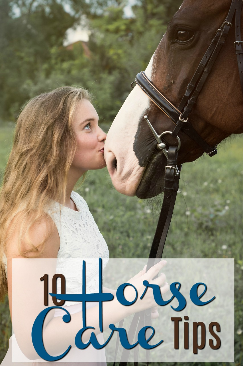 10 Horse Care Tips for the Unskilled Owner