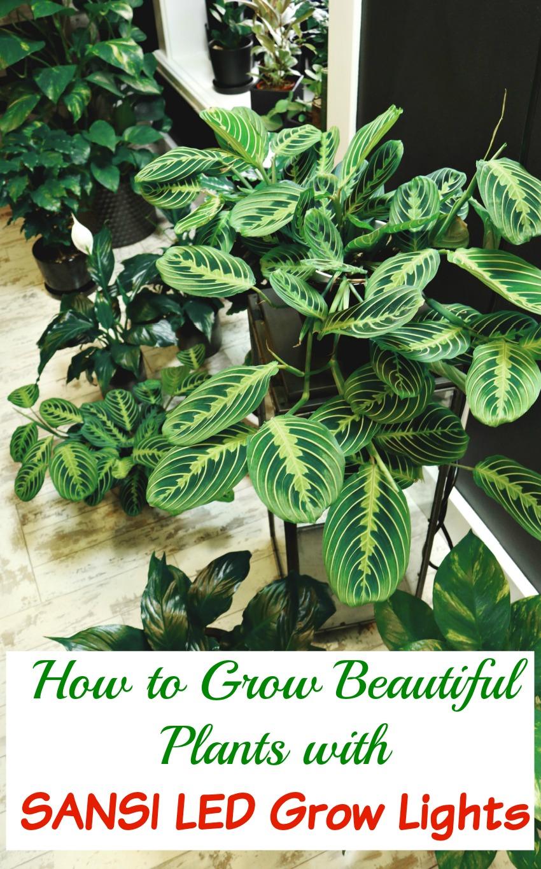 How to Grow Beautiful Plants with Sansi LED Grow Lights