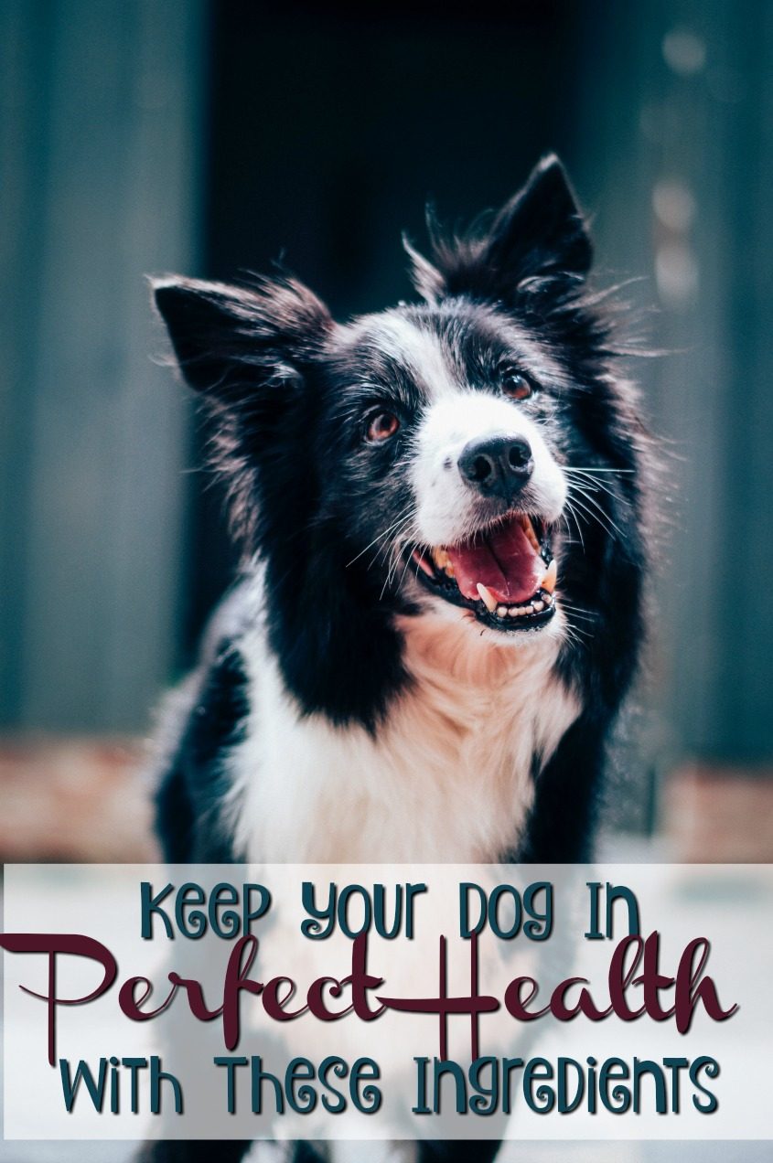 Keep Your Dog In Perfect Health with These 6 Ingredients  #pets #dogs #petfood