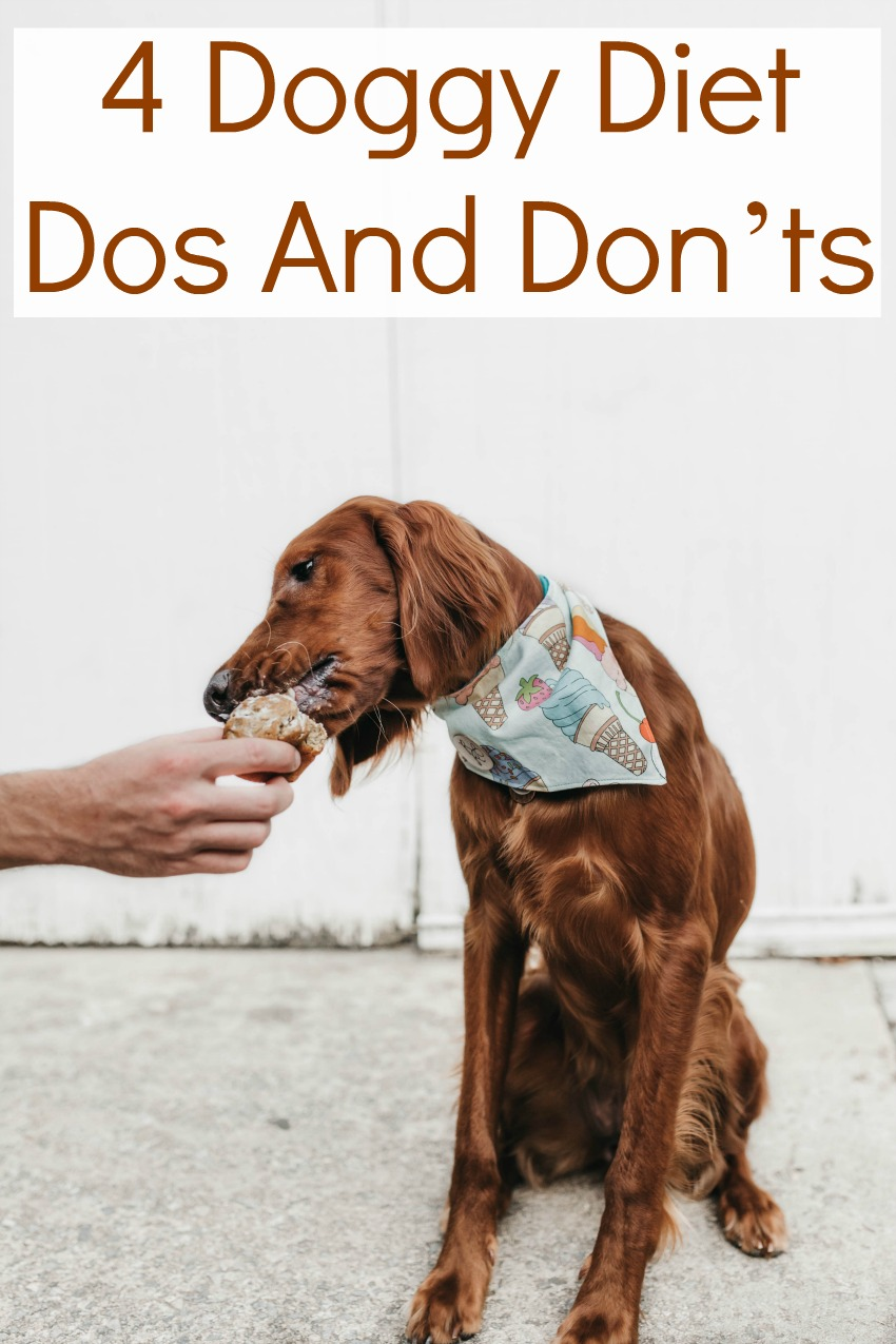 4 Doggy Diet Dos And Don'ts
