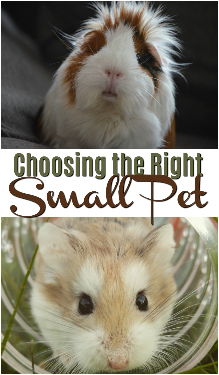 Choosing the Right Small Pet