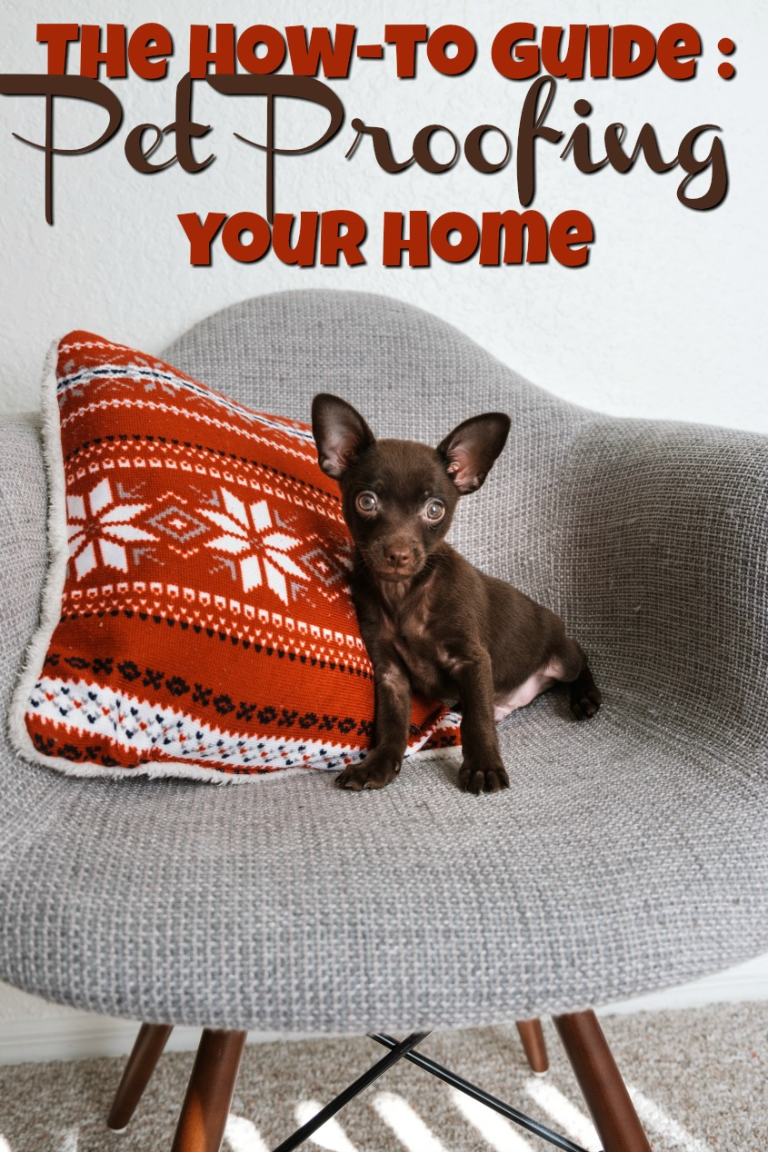 The How-to Guide to Pet Proofing your Home