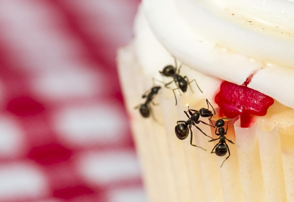 5 Signs That You Have An Ant Infestation