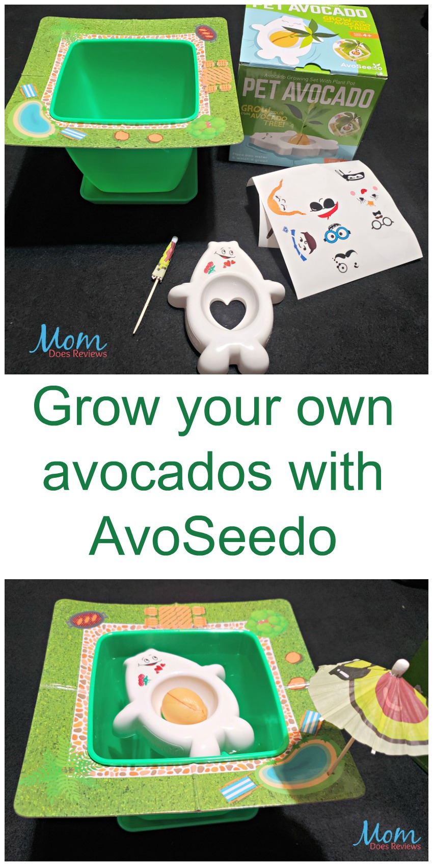 Grow your own avocados with AvoSeedo