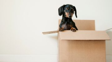 3 Great Ways to Organise Your Home Move