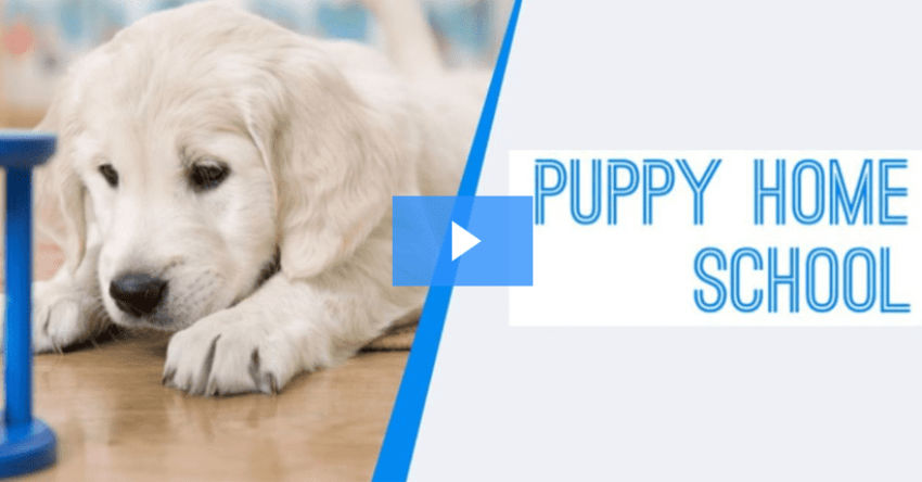 Training Your Puppy Through Online Classes by The Dog Coach