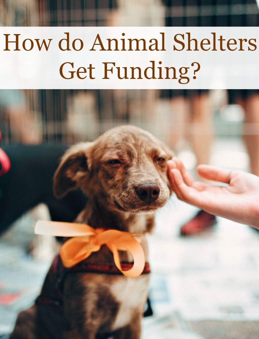 How do Animal Shelters Get Funding?