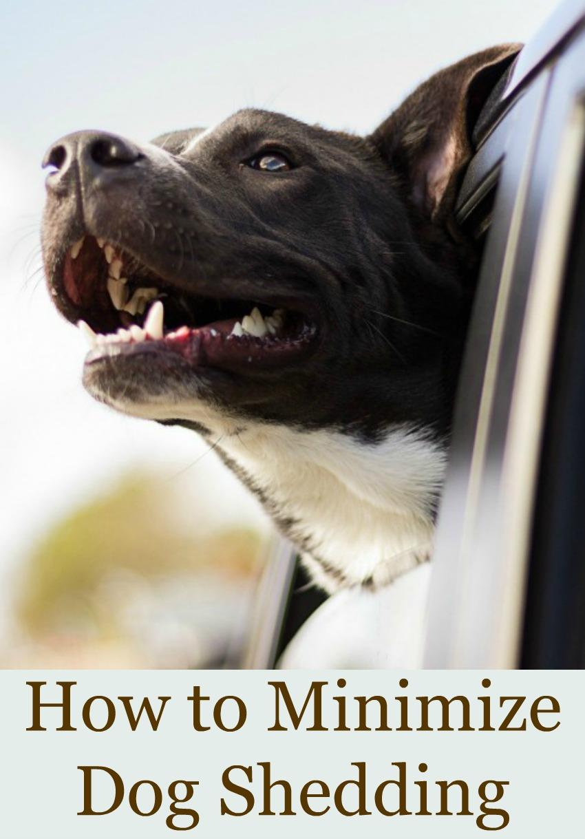 How to Minimize Dog Shedding