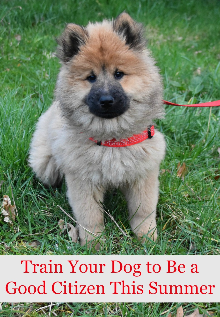 Train Your Dog to Be a Good Citizen This Summer