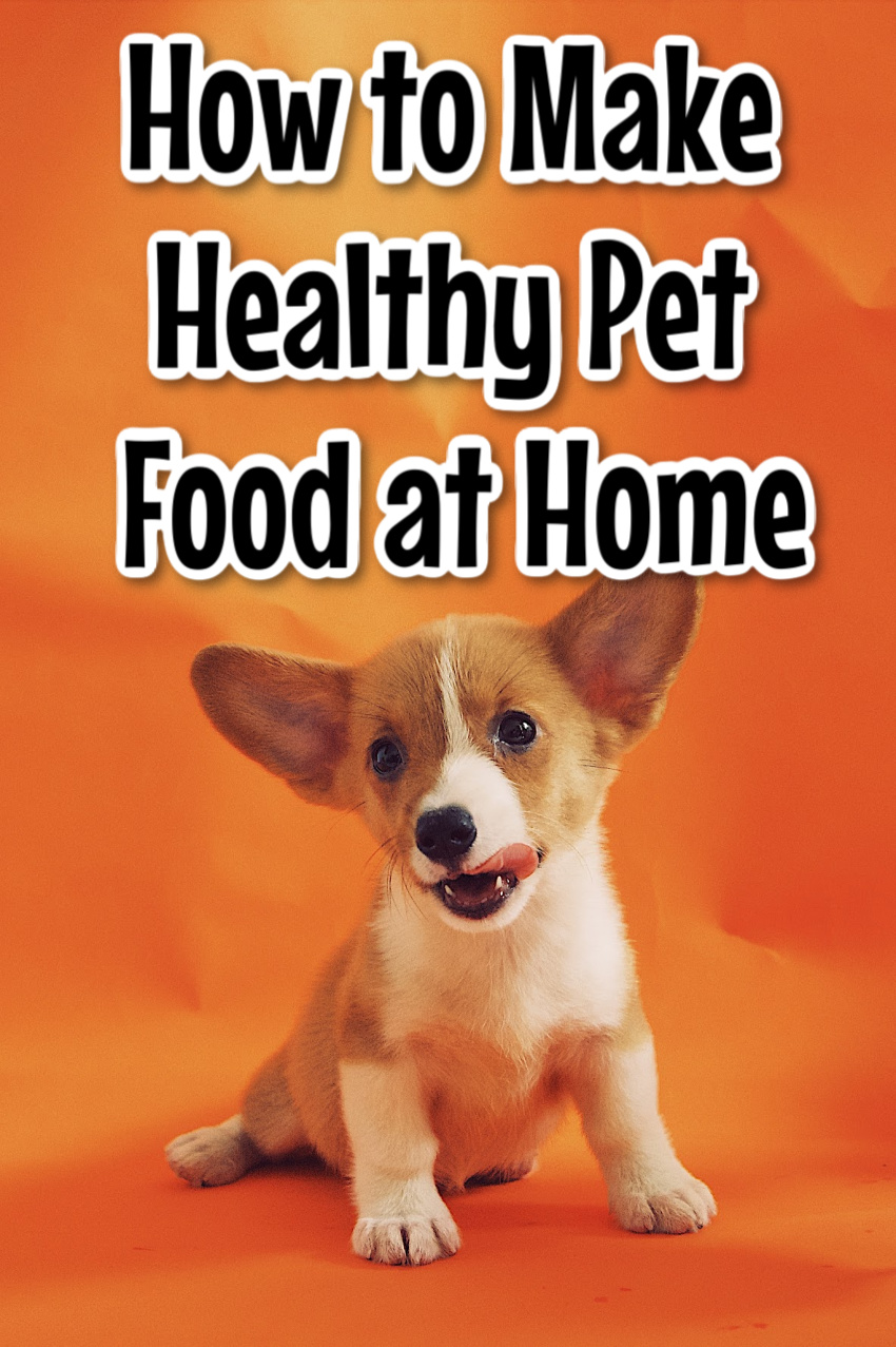 How to Make Healthy and Cheap Pet Food at Home