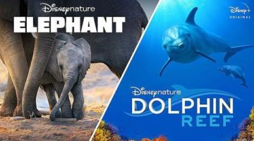 Two New Releases on Disney+ This Month - Elephant and Dolphin Reef