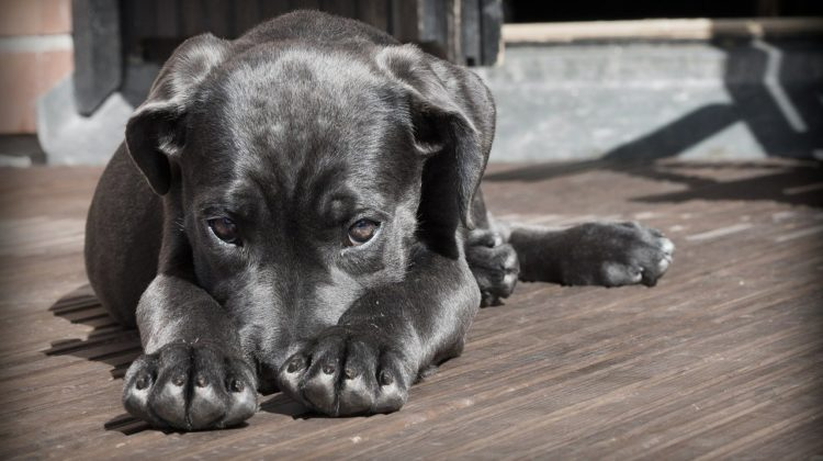 Is Your Life And Home Ready For A Dog?