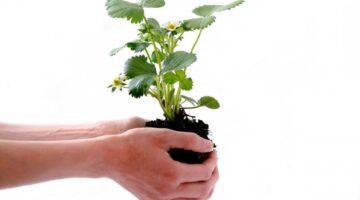 9 Smart Ways of Keeping Your Home's Garden Healthy